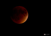 Supermoon Lunar Eclipse 2015 in Illinois-5