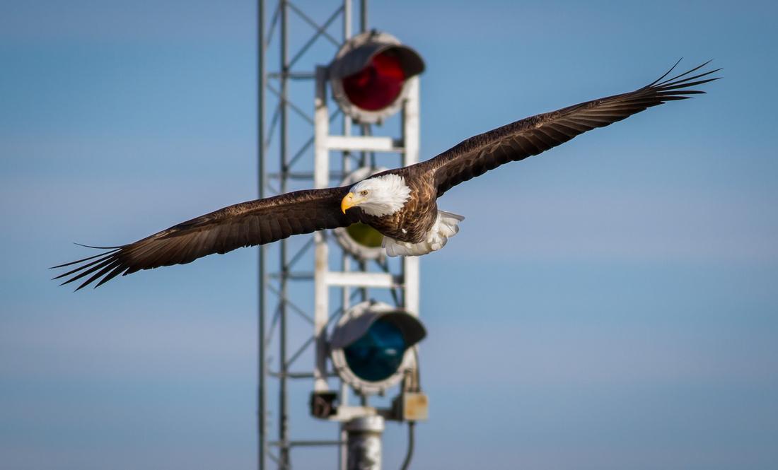 A Slow Season for Eagles