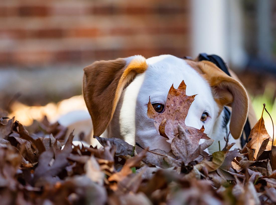 Sneaking a Peek