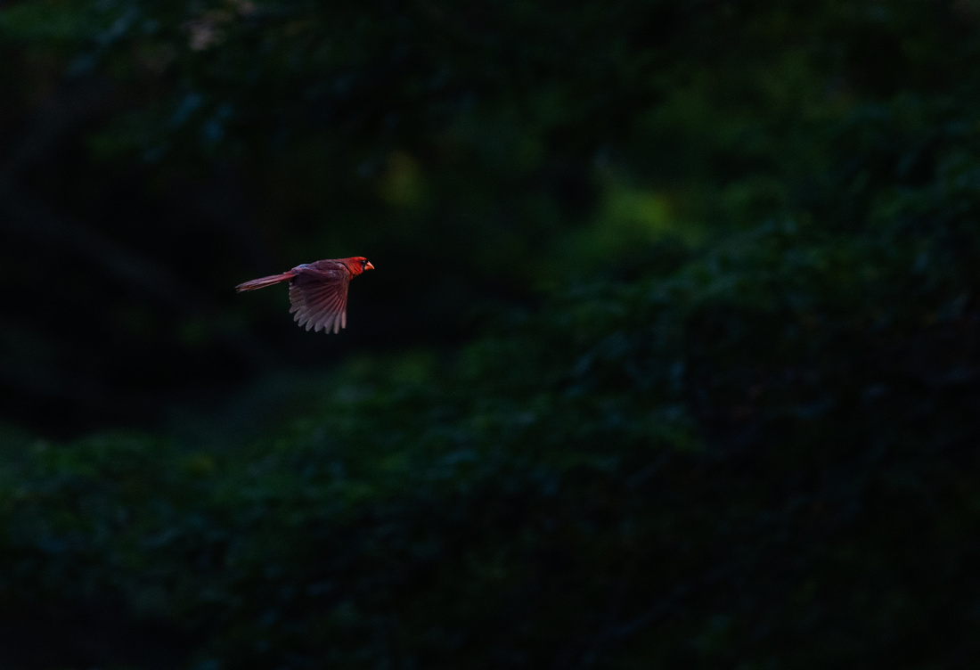 Flying Into the Last Remaining Light of the Day