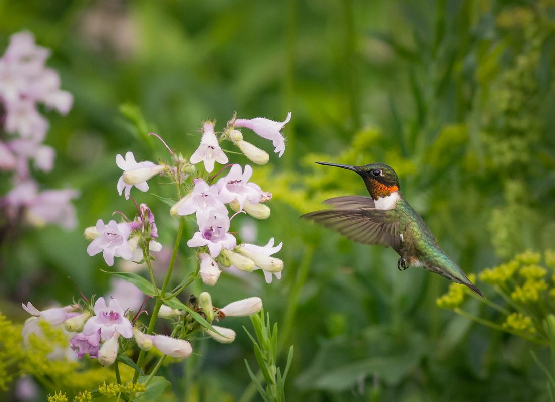 A Hummingbird's World