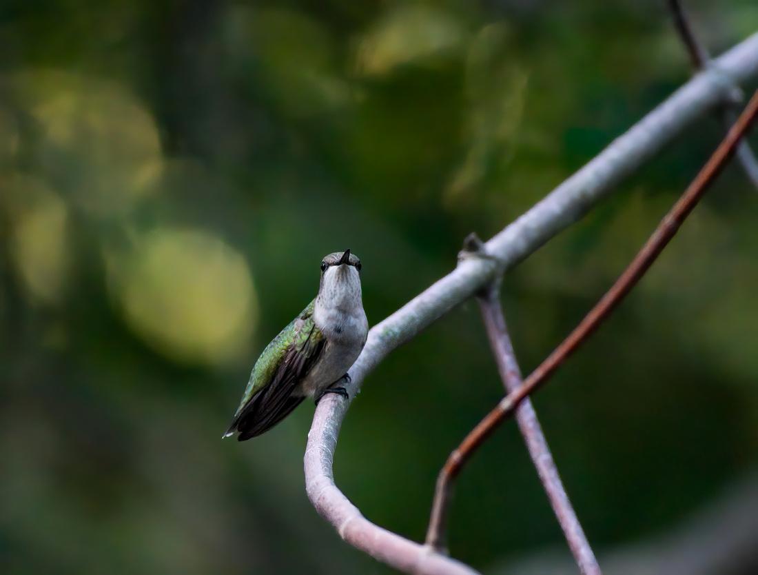 Hummingbird Finds a Web-5