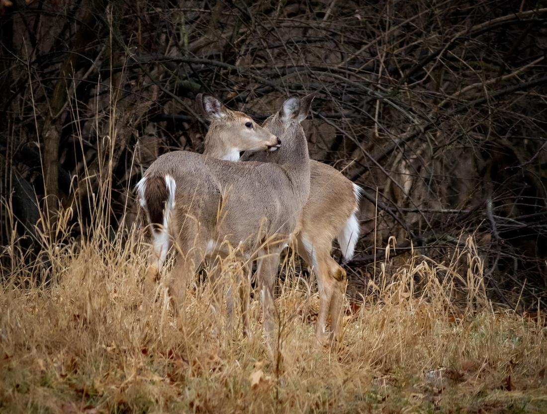 A Hug from a Deer Friend