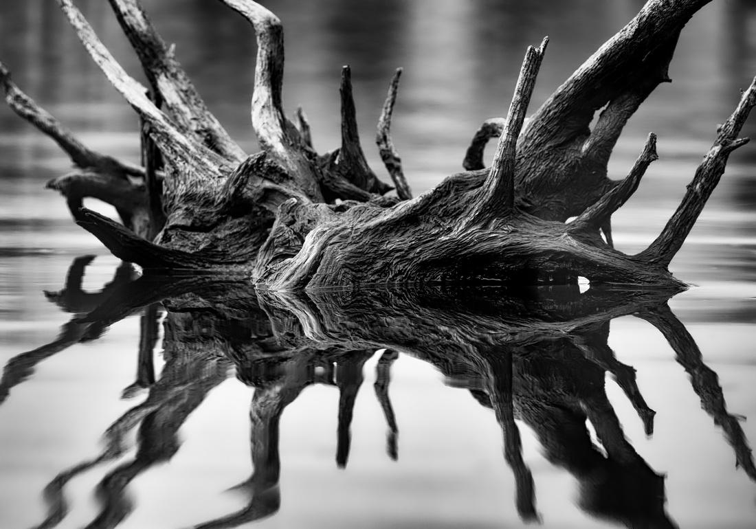 Stump Reflection