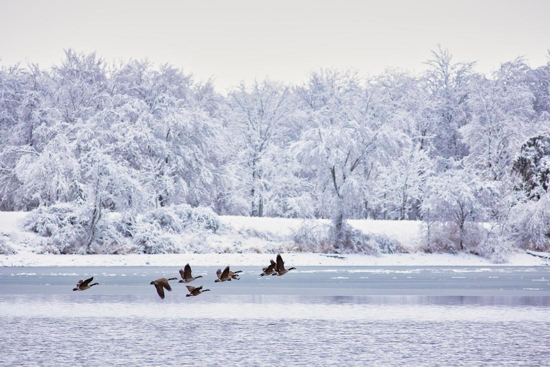 Flying in a Winter Wonderland
