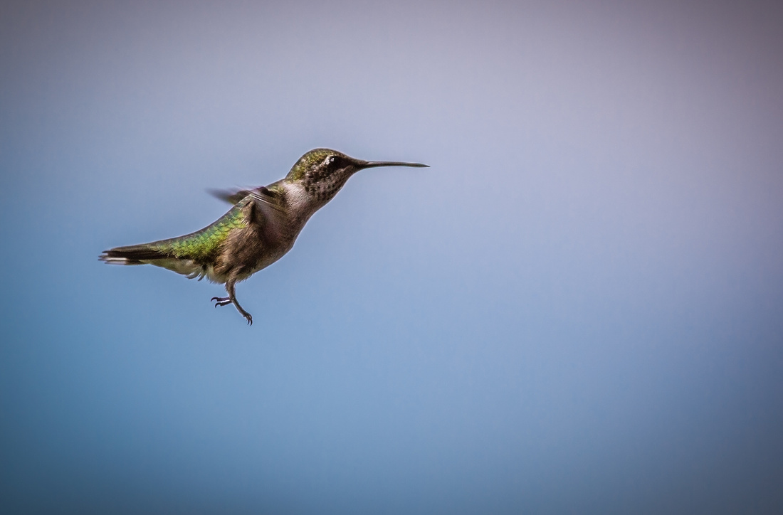 Hummingbird Landing Gear Down