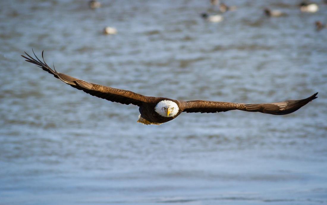Head On with an Eagle