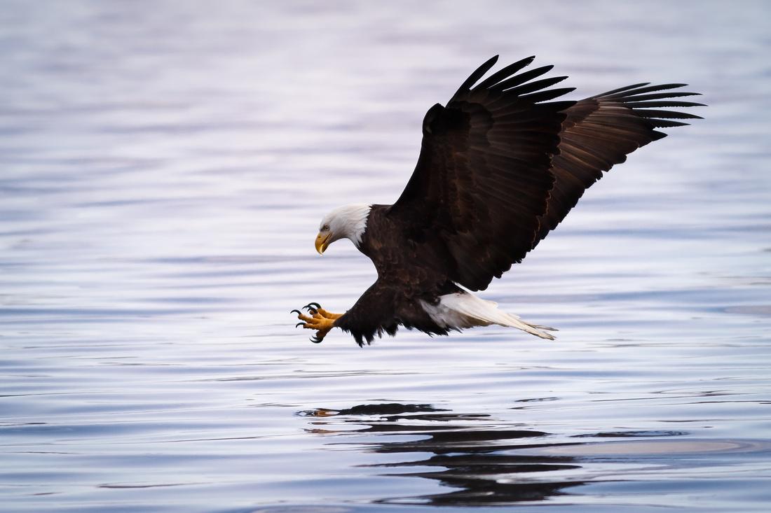 American Treasure the Eagle
