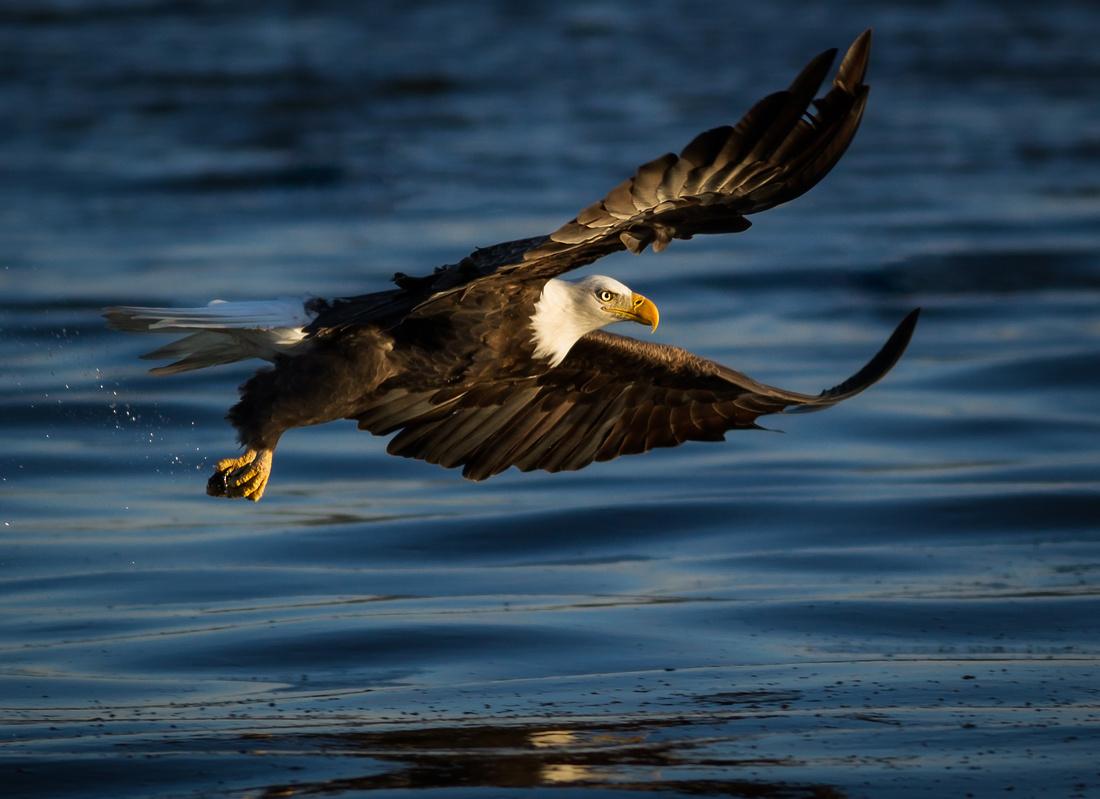 Eagle Just Missed