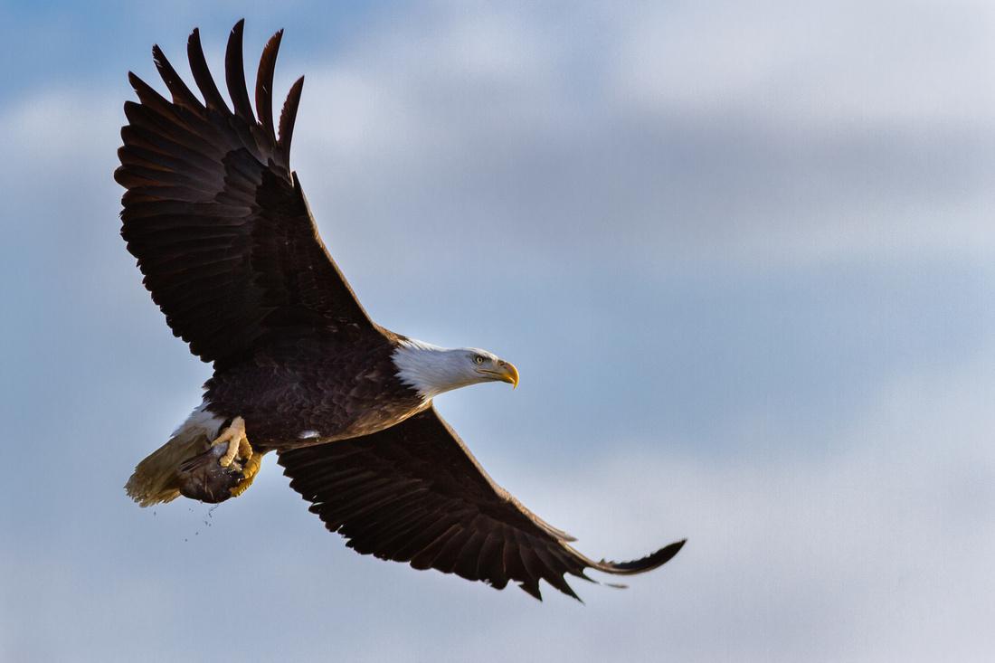 Impressive Flyover